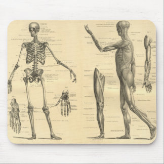 Human Anatomy Skeleton and muscles of the body Mouse Pad