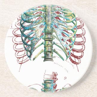 Human Body Rib Cage Drink Coaster