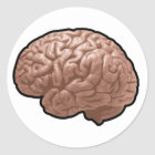 Human Brain Stickers
