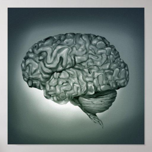 Human Brain - Surreal Anatomical Art Poster 11x11