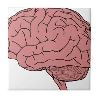 Human brain tile