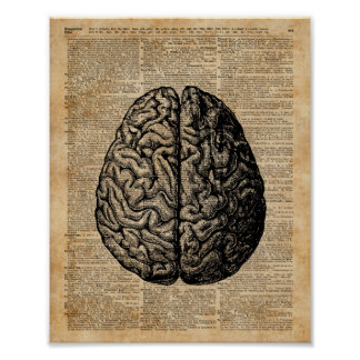 Human Brain Vintage Illustration Dictionary Art Poster