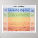 Human Brain Waves Diagram - Rainbow Colours Poster