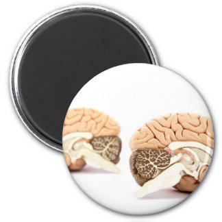 Human brains model isolated on white background 2 inch round magnet