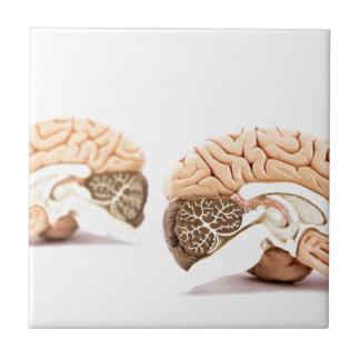 Human brains model isolated on white background ceramic tile