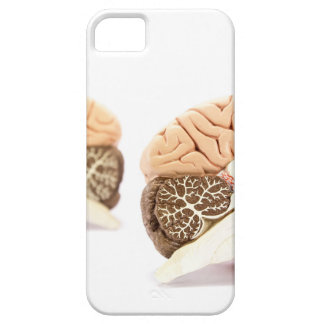 Human brains model isolated on white background iPhone 5 covers