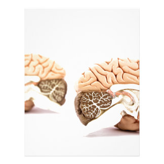 Human brains model isolated on white background letterhead