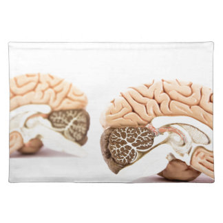 Human brains model isolated on white background place mats
