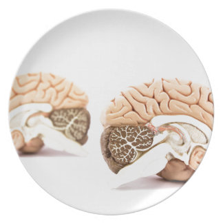 Human brains model isolated on white background plate