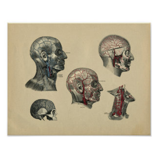 Human Head Neck Anatomy 1902 Vintage Print