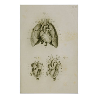 Human Heart and Lungs Vintage Anatomy Print