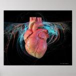 Human heart, computer artwork. poster