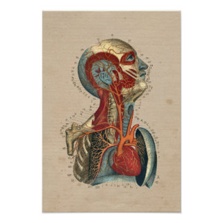 Human Heart Head Neck Anatomy 1841 Print