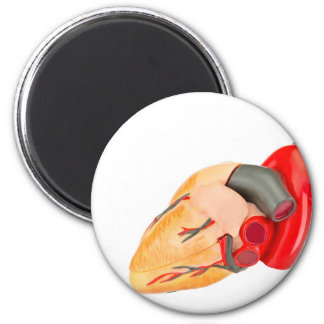 Human heart model isolated on white background 2 inch round magnet