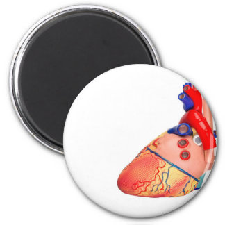 Human heart model on white background 2 inch round magnet