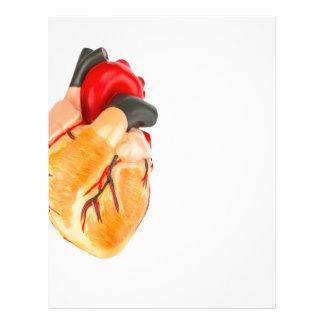 Human heart model on white background letterhead