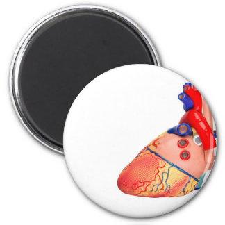 Human heart model on white background magnet