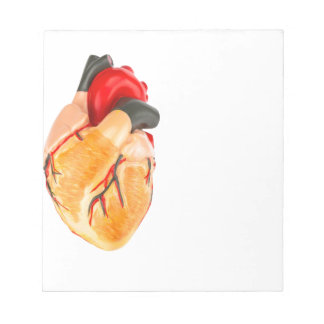 Human heart model on white background notepad