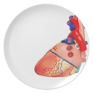 Human heart model on white background plate