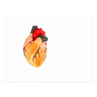 Human heart model on white background postcard