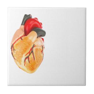 Human heart model on white background tile