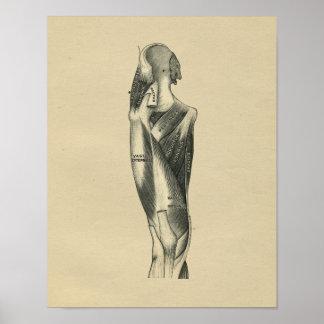 Human Leg Anatomy 1902 Vintage Print