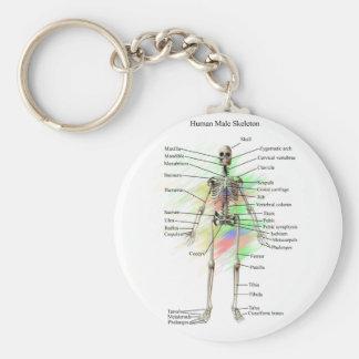 Human Male Skeleton key chain