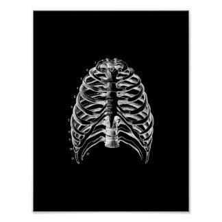 Human Ribcage Anatomy in Black and White Print