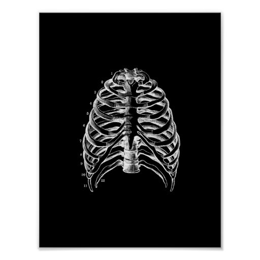 Human Ribcage Anatomy in Black and White Print