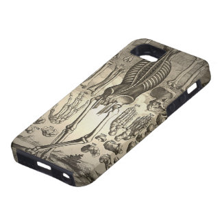 Human Skeleton ca 1741 iPhone 5 Case