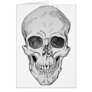 Human Skull Anatomical Illustration (Frontal View) Card