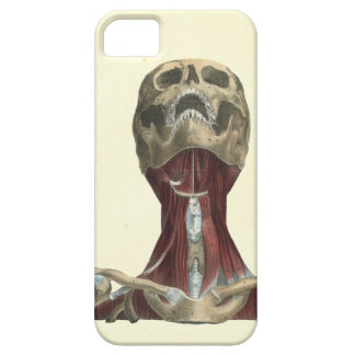 Human Skull and Neck Muscles Anatomy iPhone 5 Case