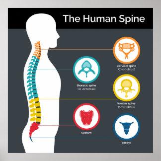 Human Spine Anatomy Chart