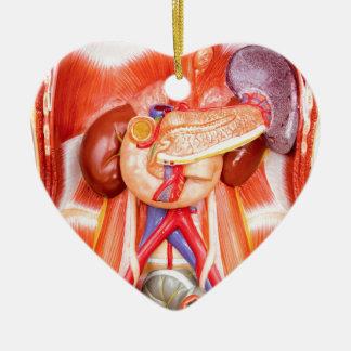 Human torso model with organs ceramic ornament