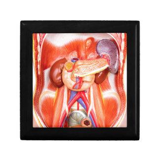 Human torso model with organs gift box