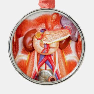 Human torso model with organs metal ornament