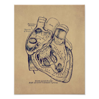 Human Vintage Anatomy Heart old paper effect Poster