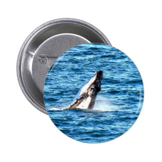 HUMBACK WHALE QUEENSLAND AUSTRALIA 2 INCH ROUND BUTTON