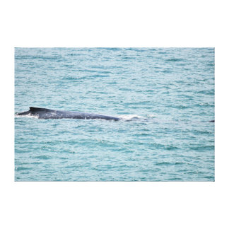 HUMBACK WHALE QUEENSLAND AUSTRALIA CANVAS PRINT