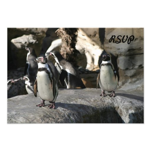 Humboldt Penguin Invites