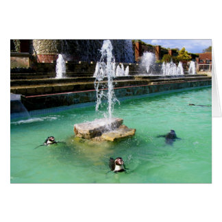 Humboldt penguins and fountains greeting card