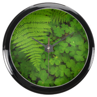 Humboldt Redwoods State Park Aqua Clock