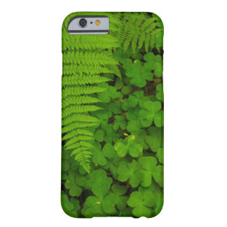 Humboldt Redwoods State Park Barely There iPhone 6 Case