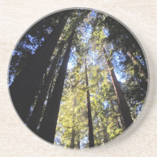 Humboldt Redwoods State Park Beverage Coasters