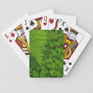 Humboldt Redwoods State Park Card Decks