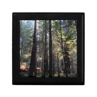 Humboldt Redwoods State Park Keepsake Boxes