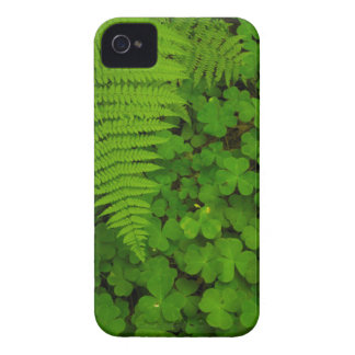 Humboldt Redwoods State Park iPhone 4 Covers