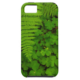 Humboldt Redwoods State Park iPhone 5 Cases