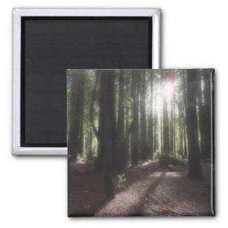 Humboldt Redwoods State Park Magnets