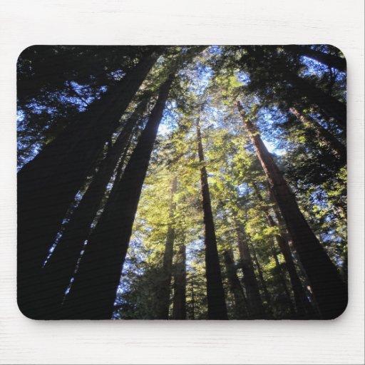 Humboldt Redwoods State Park Mouse Pads